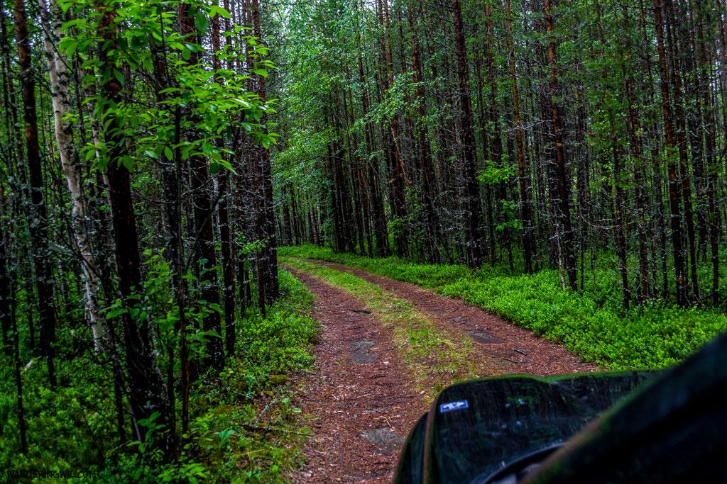 verde-strada-bosco-WanderingWil