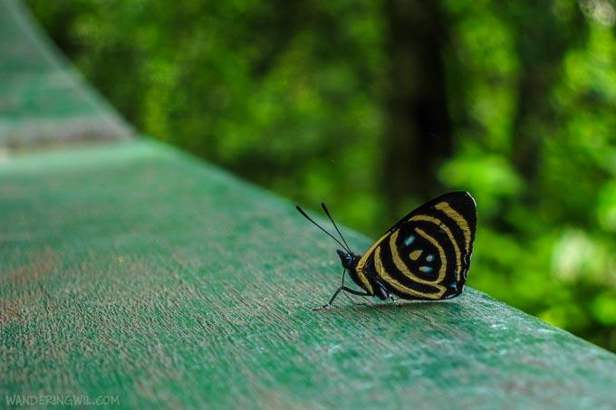 farfalla-2-wandering-wil