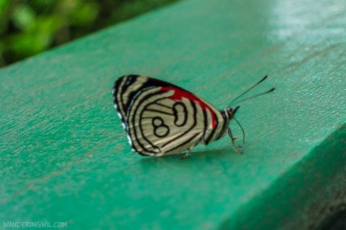 farfalla-80-wandering-wil