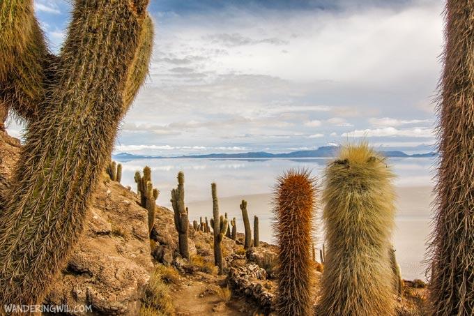 cactus-salar-ujuni-wandering-wil