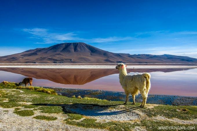 laguna-colorada-wandering-wil