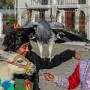 animali-turismo-wandering-wil