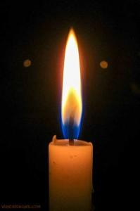candela-wandering-wil