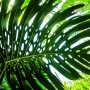 foglia-banana-wandering-wil