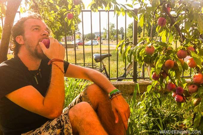 susine-giardino-wandering-wil