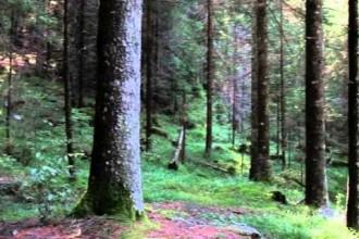 Il prigioniero della prigione dei pini – Parte 4 – Ritorno in patria