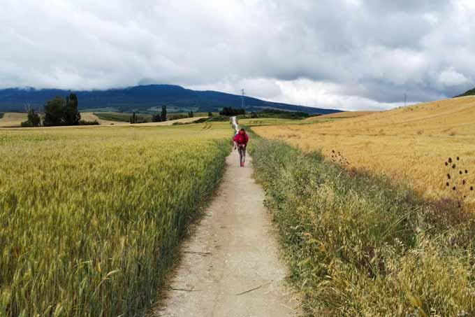 cammino-santiago-wandering-wil-2